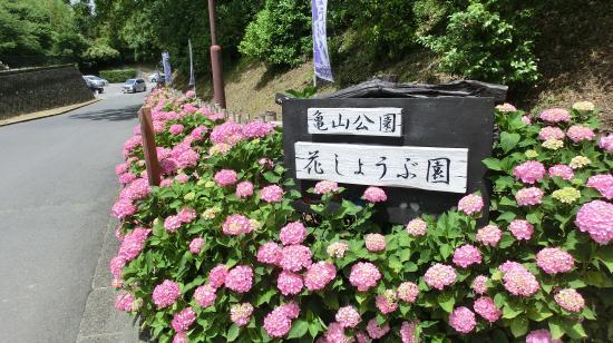 Kameyama Park: 亀山公園花しょうぶ園