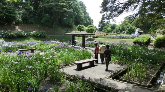 Kameyama Park: 花しょうぶまつり