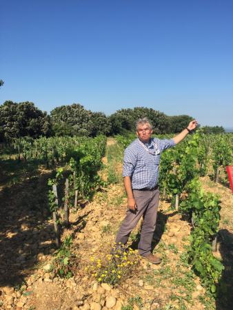 Wine Safari: photo0.jpg