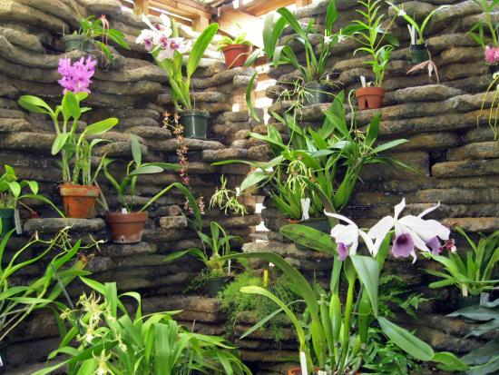 Orchid Walls Picture Of University Of South Florida Botanical Gardens Tampa Tampa Tripadvisor