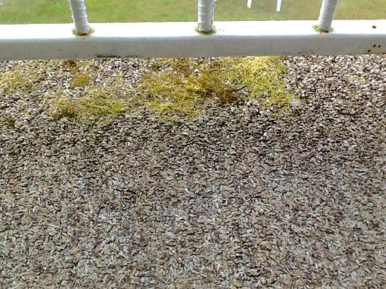 Mold / Fungi on deck indoor outdoor carpeting, Room 28 - Picture ...