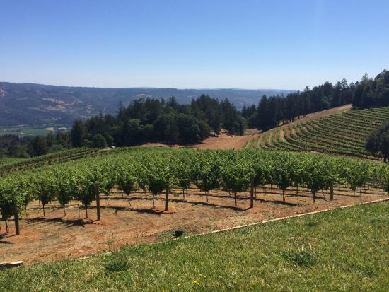Smith-Madrone Vineyards