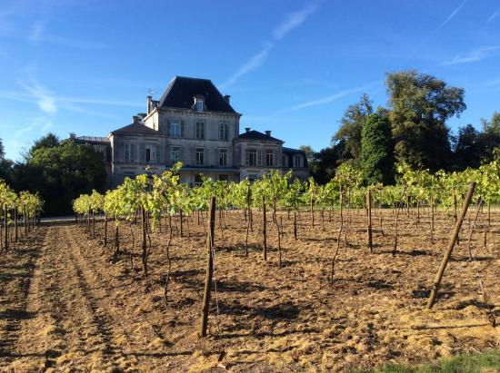 Domaine du Breuil: Small vineyard in front of hotel