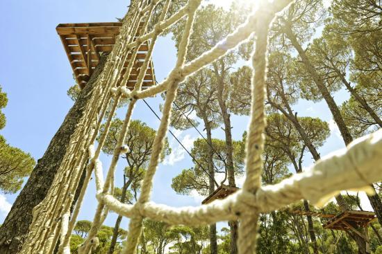 La Maison de la Foret: Tree Climbing