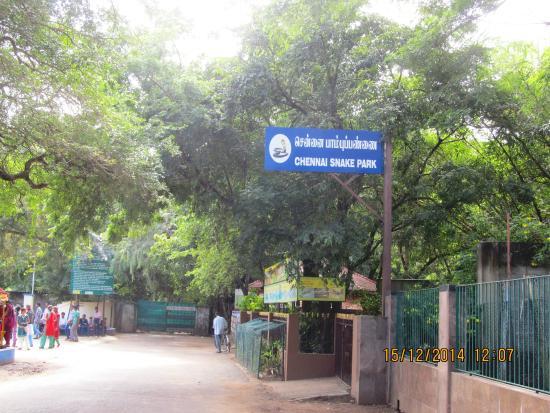 Guindy Snake Park: Entrance Pic to park