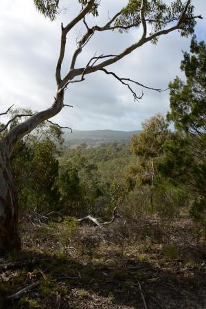Lyndoch, Australien: One of the many stunning views along the Blue Route