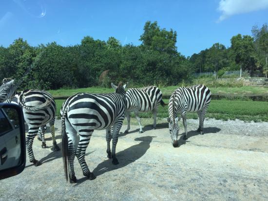 West Palm Beach Lion Country Safari Koa