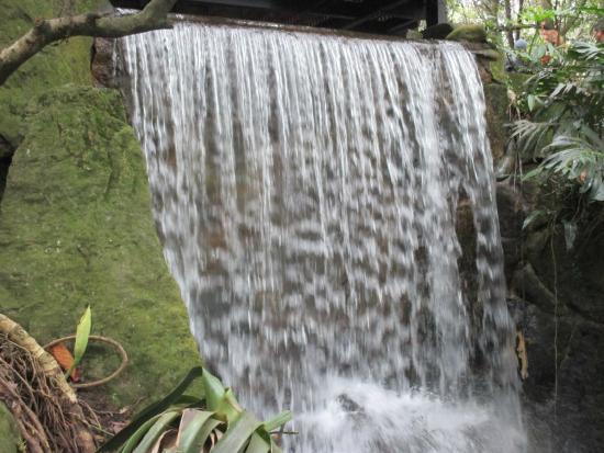 Jardim Bot Nico Picture Of Jardin Botanico De Bogota Jose Celestino Mutis Bogota Tripadvisor