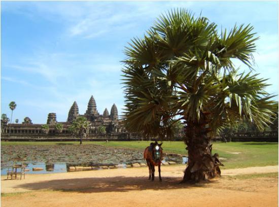 Angkor Best Driver: angkor wat temple