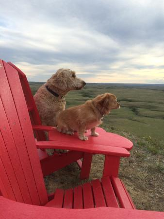 Grasslands National Park: Kopper and Peanut enjoying the view on the East Block. A beautiful Father's Day adventure from R