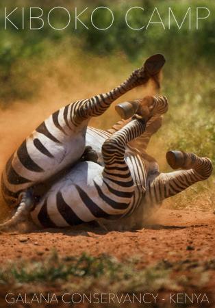 Kiboko Camp: Zebra