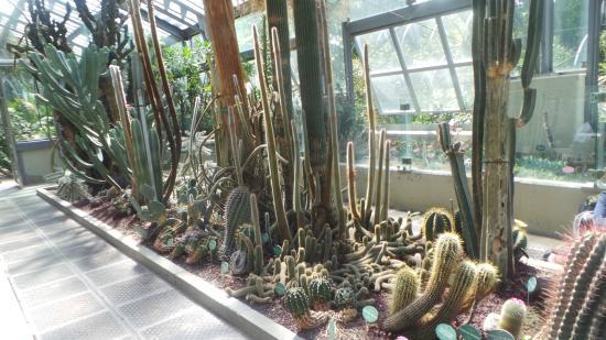 Estufa de cactus e plantas tropicais picture of royal for Jardin cactus madrid