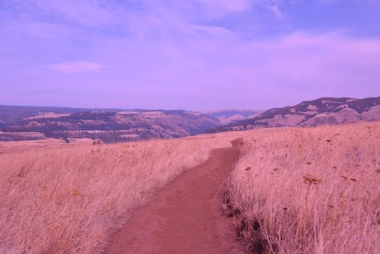 Tom McCall Nature Preserve: The trail to the gorge