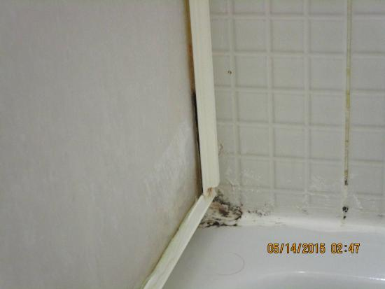 B&B Gregorius close to St. Peter's: this is in the shower, mold!!!!!!! which we never used
