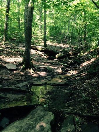 Sope creek trail marietta all you need to know before for Cabins near marietta ga