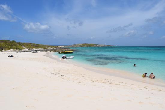 Simpson Bay, St-Martin/St Maarten: Prickly Pear