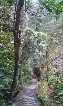 Go Great Barrier Island - Day Tours: Windy Canyon