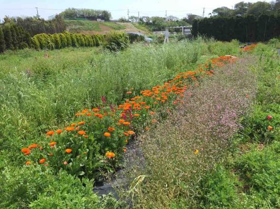 Iijima Farm