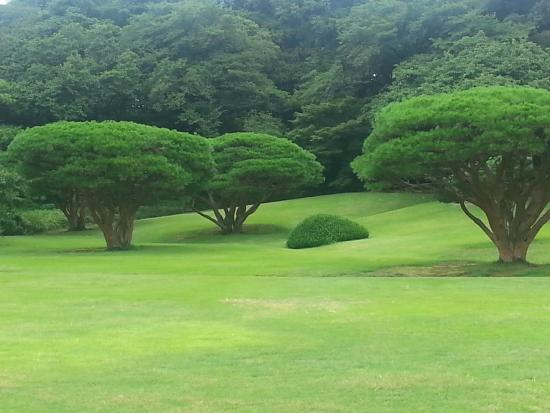 Shinjuku Gyoen National Garden : Expansive lawns and grassed areas for relaxing