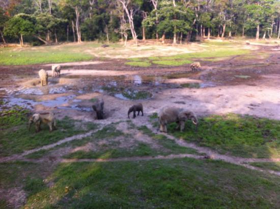 Dzanga-Sangha Reserve