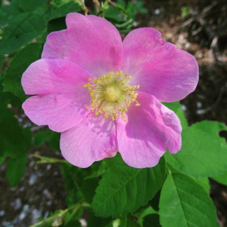 Mount 7 Lodges: Wild Rose