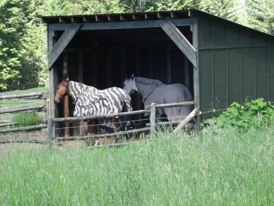 Mount 7 Lodges: Pferde der Eigentümer der Lodge