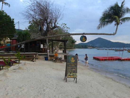Cafe de Lotus: Palm tree