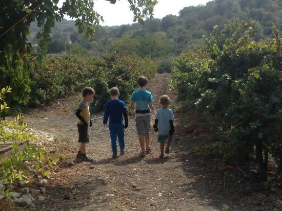Excursões e Provas de Vinhos