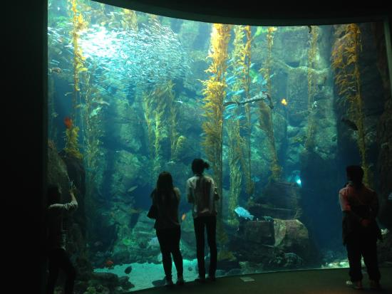 aquarium picture of california science center los