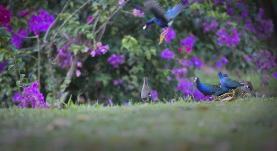 Talparo, Trinidad: surrounded by nature.