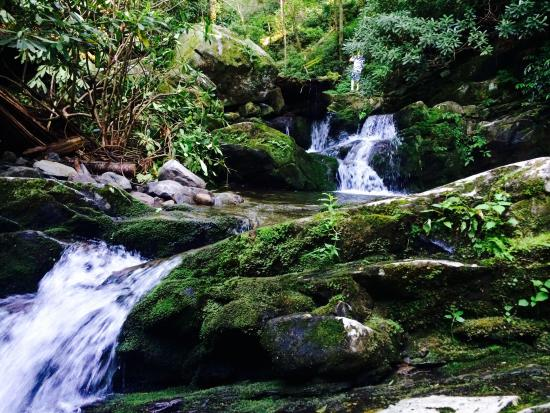 Picture of roaring fork motor nature trail for Roaring fork smoky mountains