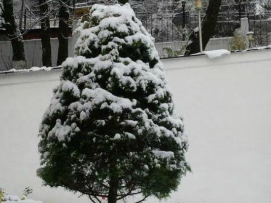 The Manu Maharani Hotel: Winter Season