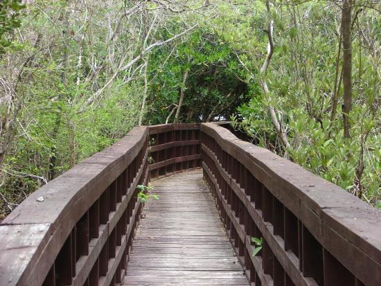 La Gran Ceiba de Vieques