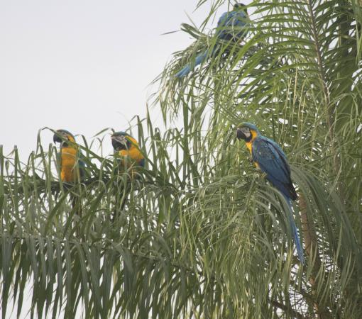 Barba Azul Reserve