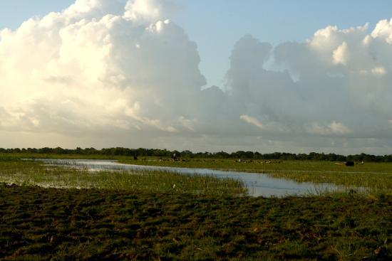 Fazenda Sanjo : campos alagados