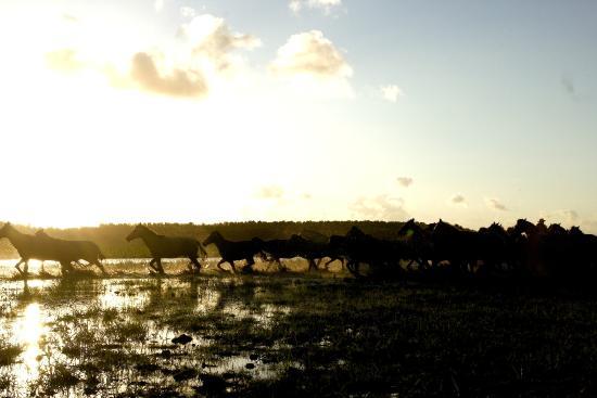 Fazenda Sanjo : campos alagados - inverno marajoara