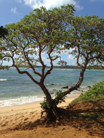 Anahola Beach Park: Anahola beach, secluded beauty