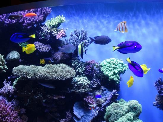 Todo Tipo De Peixe Picture Of Monterey Bay Aquarium