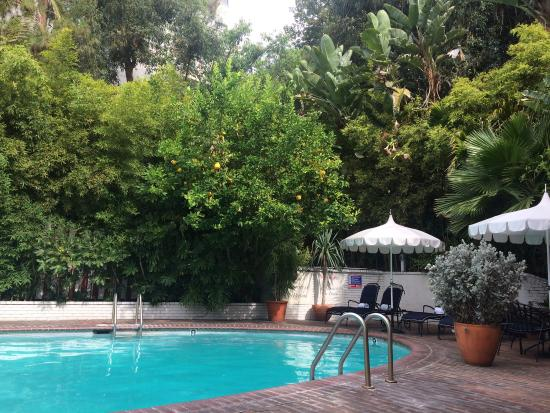 Swimming Pool Picture Of Chateau Marmont West Hollywood Tripadvisor
