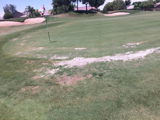 Stallion Mountain Golf Club : Sample condition of greens