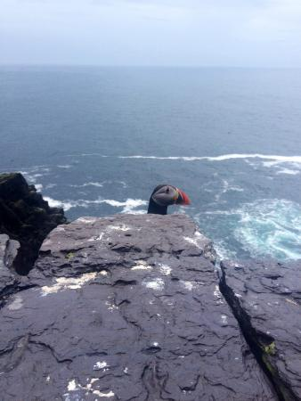 Skellig Tours: Puffin dominating the island