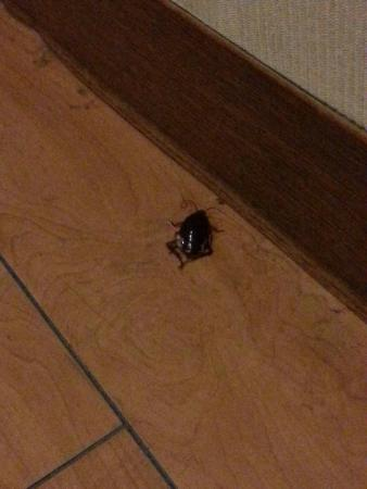Osaka City Hotel Kyobashi: smelly bathroom! then the big black cockroach came out from under the bed !!! VERY disappointed.