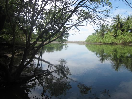 Puerto Jimenez, كوستاريكا: Corcovado