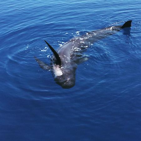 Santuario dei Cetacei Image