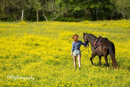 Forrest Hills Mountain Resort and Conference Center: Ride horses with Gold City Corral located at our entrance.