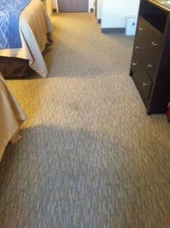 Comfort Inn and Suites : Filty carpet