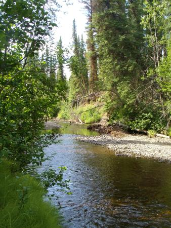 Tolsona Wilderness Campground: Creek along side our camp site