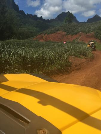 Moorea, Fransk Polynesia: Pineapple fields