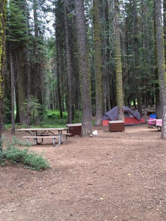 Crane Flat Campground : 208