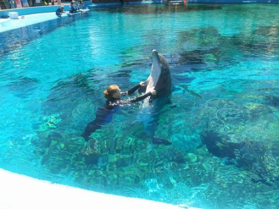 Dauphins Picture Of Siegfried Roy 39 S Secret Garden And Dolphin Habitat Las Vegas Tripadvisor
